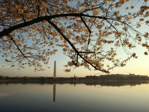 cherry-blossom-tree-monument_13301_990x742